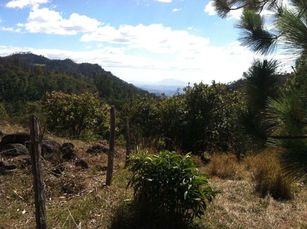 Mountain pasture in El Arado, Honduras. Coffee and potatoes are grown under the trees near by.